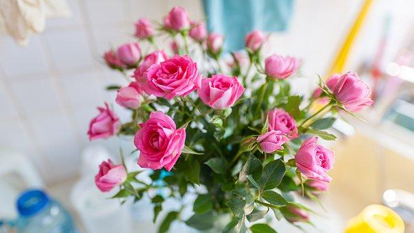 Flower, Plant, In Full Bloom, Rose