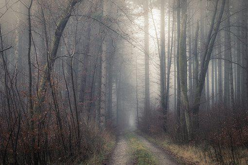 Forest Path, Dark, Mystical, Fog, Forest, Away, Nature