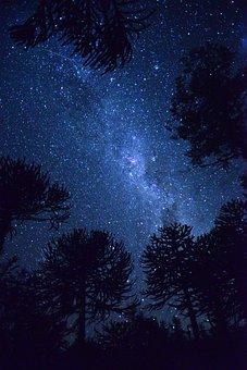 Night, Blue, Star, Sky, Galaxies, Trees, Dark, Universe