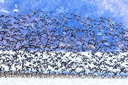 Migratory Birds, Birds, Emergency, Reservoir, Mountain