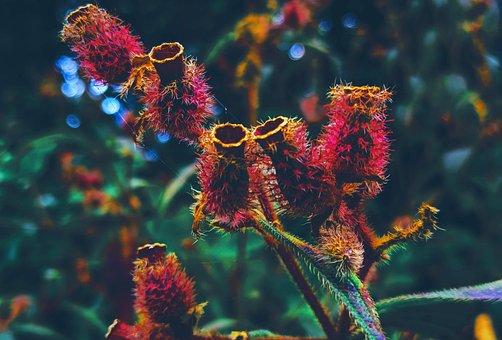 Flower, Venusflytrap, Green, Nature, Idyllic, Relax