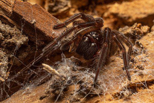 Macro, Spider, Insect, Nature, Close Up, Animal