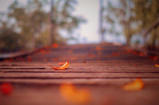 Orange, Leaves, Autumn, Nature, Colorful, Leaf, Red
