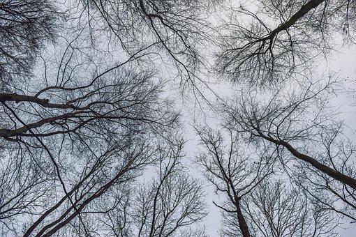 Forest, Landscape, Nature, Trees, Scenic, Secret