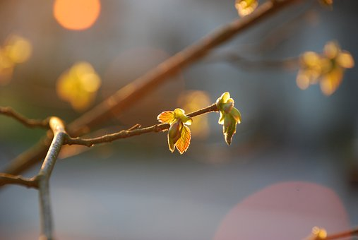 Spring, Light, Sun, Evening Sun, Nature, Lighting