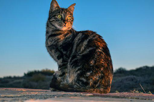 Cat, Stray, Animal, Cute, Portrait, Outdoors, Homeless