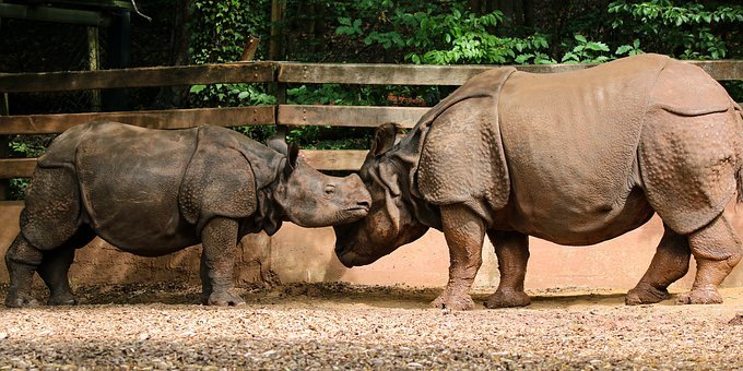 Animal World, Rhino, Africa, Pachyderm