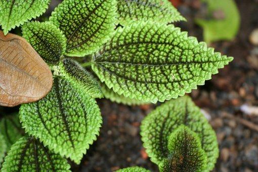 Leaves, Pattern, Nerves, Green, Nature, Foliation