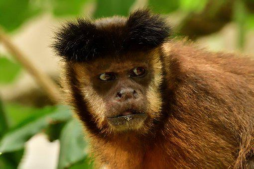Monkey, Animal, Animal World, Portrait, Ape, Face