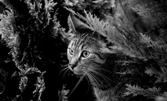 Cat, Kitten, Animals, Fur, Portrait, Nice, Eyes, Mammal