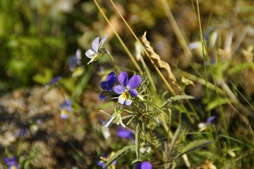400–500, Wild, Wild Flower, Meadow, Steinig, Summer