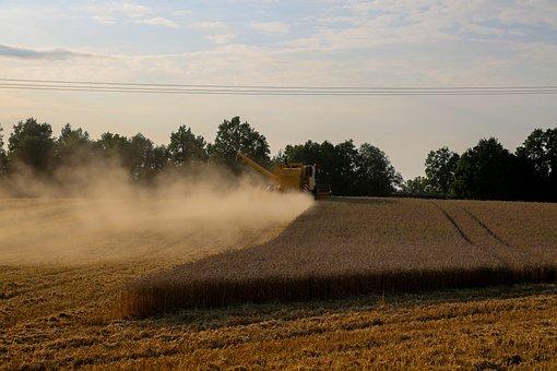 Harvest, Field, Agriculture, Summer, Cereals, Landscape