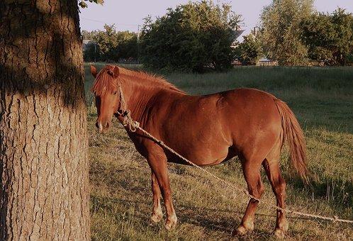 Horse, Animals, Stallion, Sunset, Nature