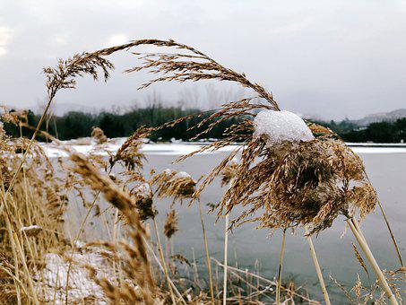 Winter, Gold, Wheat, The Silence