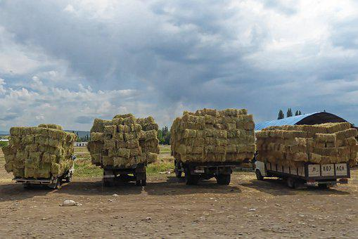 Truck, Transport, Commercial Vehicle, Vehicle, Straw