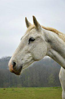 Horse, White Horse, Nature, Animal, Equine, Mare