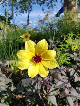 Yellow, Flora, Green, Yellowflowers, Flowerlovers