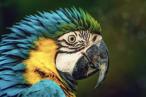 Parrot, Ara, Plumage, Zoo, Animal World, Bill, Color