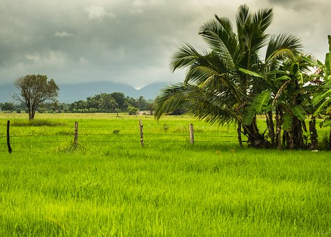 Asia, Rice Fields, View, Landscape, Nature, Green