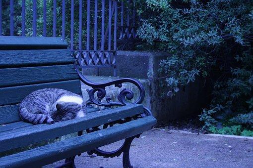 Athens, Greece, Sleeping, Cat, Bench, Green, Dark