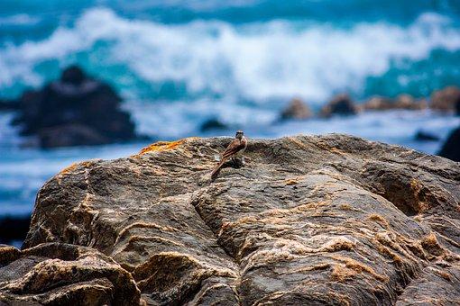 Bird, Rock Formation, Sea, Ocean, Nature