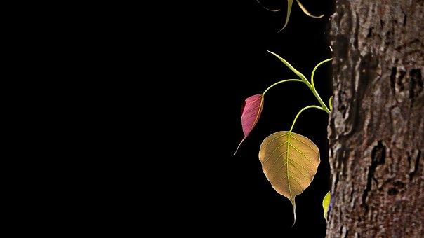 Tree, Bodhi Tree, Bo, Ficus Religiosa, India, Nature