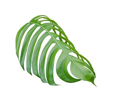 Palm, Leaf, Green, Botany, Exotic