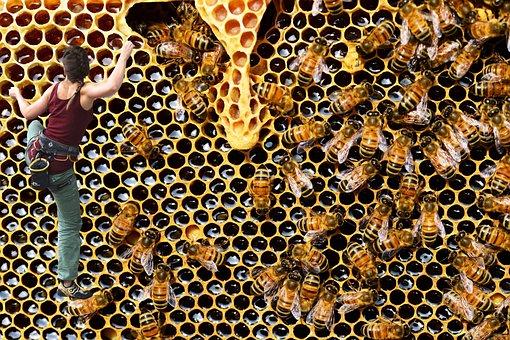 Photomontage, Bees, Climbing, Honeycomb, Hive