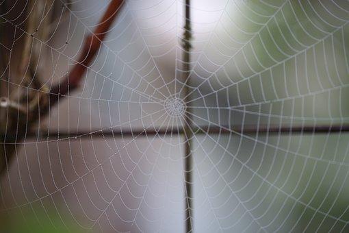 Cobweb, Spider Webs, Nature, Web, Autumn, Dewdrop