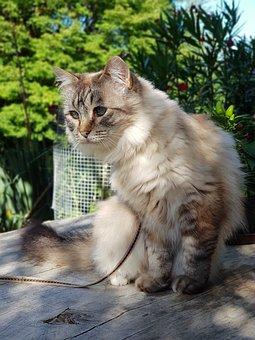 Cat, Beige, Cute, Fur, Mieze, Sweet, Relaxed, Animal