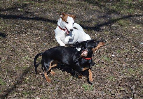 Dog, Jack Russell, Terrier, Each, Friendship, Animals