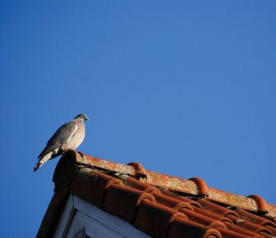 Dove, Roof, Bird, Animal, Birds, Gable, Plumage