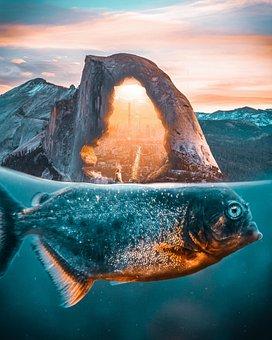 Fish, Background, Photoshop, Fantasy, Sea, Ocean