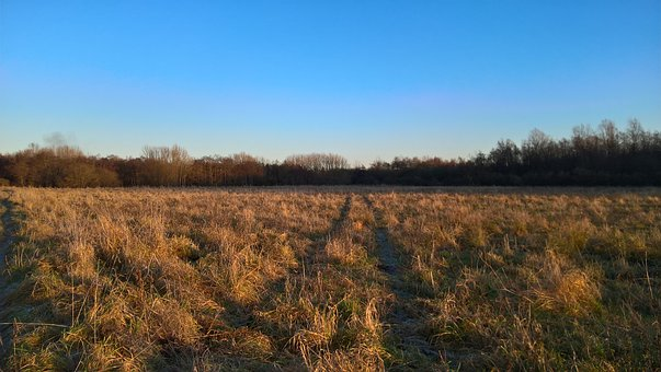 Field, Autumn, Clear, Sky, Blue, Farmland, Trees, Haze