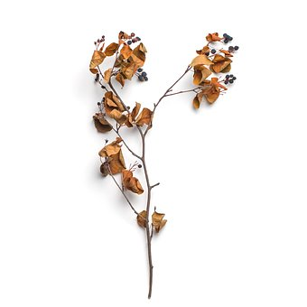 Floral, Nature, Branch, Plant, Botany, Isolated