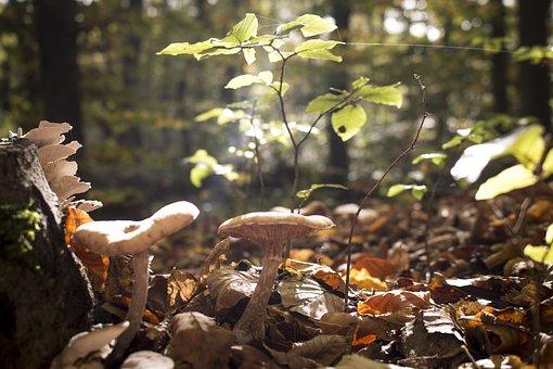 Mushrooms, Cobweb, Forest, Tree, Autumn, Leaf, Nature