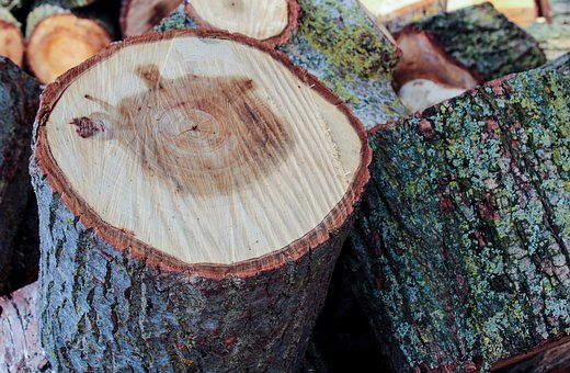 Wood, Chopped, Cut, Growth Rings, Pattern, Texture