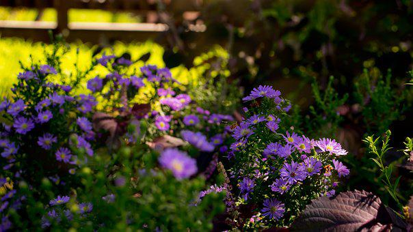 Flowers, Sunshine, Herb, Photosynthesis, Morning