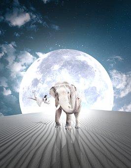Elephant, Moon, Lighting, Girl, Shadow, Flight, Soar