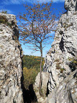 View, Rocks, Limestones, Tree, The Height Of The