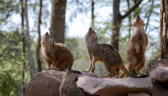 Mammal, Prairie Dog, Prairie, Dog, Animal, Nature