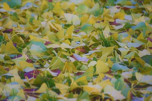 Autumn, Autumn Colours, Mosaic, Fall Foliage