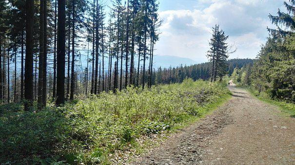 Beskids, Mountains, Landscape, Forest, Poland, View
