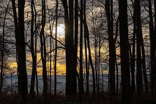 Forest, Trees, Landscape, Nature, Light, Natural