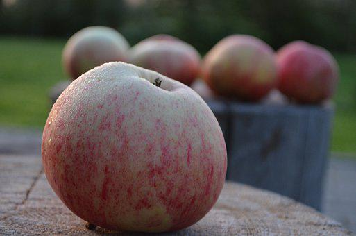 Apple, Holiday, Apple Spas, Rosa, Garden, Nature