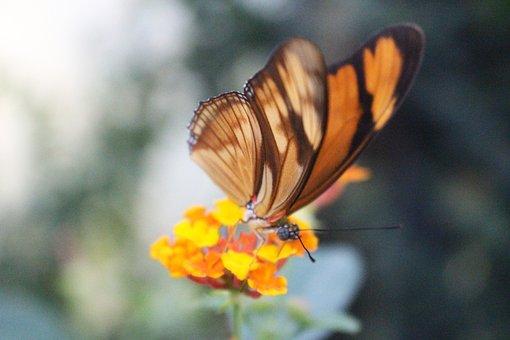 Orange, Butterfly, Selective Focus, Macro, On, Flower