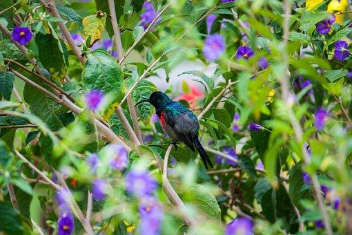 Bird, Plants, Nature, Greenery