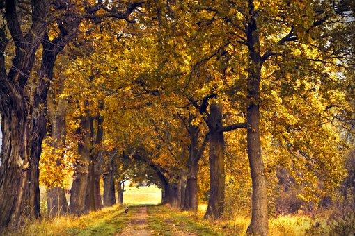Avenue, Row Of Trees, Oak, Oak Avenue, Away, Hanson