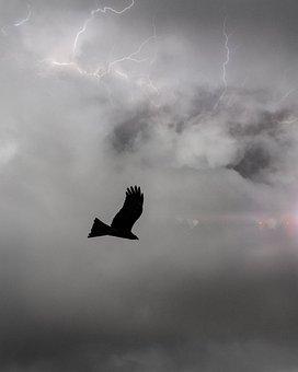 Tranquil, Scenic, Bird, Stormy Sky, Thunder, Silhouette