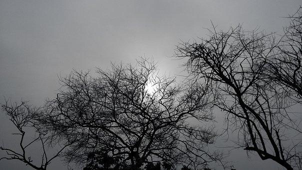 Trees, Forest, Nature, Landscape, Path, Fog, Mystical